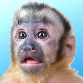 Happy The Monkey