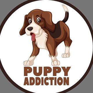 puppy and dog world