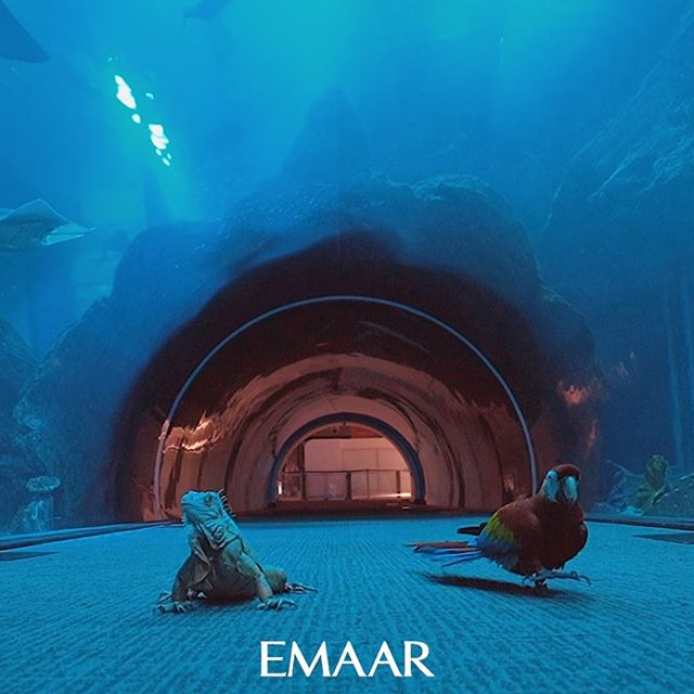 #Repost @dubaiaquarium  Our favourite animals from #DubaiAquariumandUnderwaterZoo are out to discover #TheDubaiMall as they wait for you to join them once again!  #DowntownDubai  أصدقاؤنا من #دبي_أكواريوم يتجولون في أرجاء #دبي_مول لحين عودتكم إليه مجدداً #وسط_مدينة_دبي