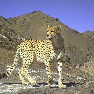جانوران در خطر انقراض ایران