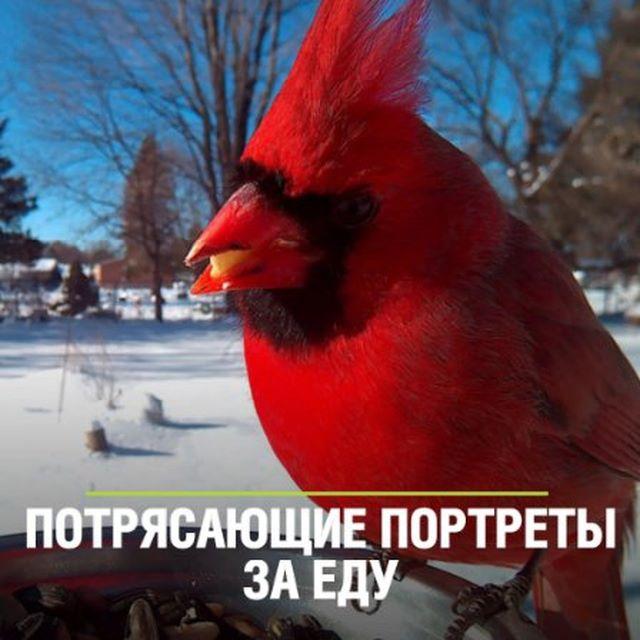 😍Женщина прикормила птиц и делает изумительные снимки, пока они едят. ⠀ 👉А теперь немного информации: несмотря на хорошую приспособленность птиц к пережиданию суровых условий,смертность среди них зимой очень высока. Например, в это время погибает до 90% синиц. ⠀ 🐦Кормите птиц зимой! ⠀ #мир24 #птицы #фото #зима #добро #интересное