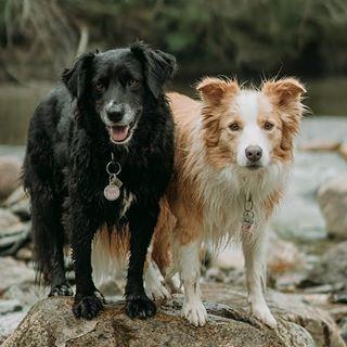 Amelia + Pippi
