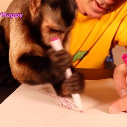@themonkeymeela has her first art lesson! Go watch the full video on MonkeyHappy YouTube channel! . . #happy #art #artist #drawing #monkey #pets #cute #capuchinmonkey #monkeys