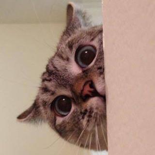 Nala Cat ™
