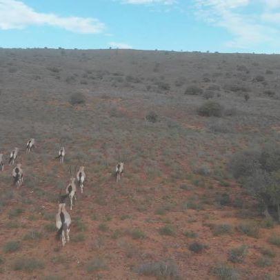 #SudAfrica #Trail en #Directo . Pastoreando al ganado.. 😂😂😂 . #LetTheAdventureBegin #DJI #TwinTrailExperience