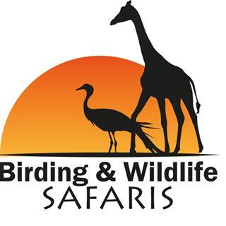 Birding and Wildlife Safaris