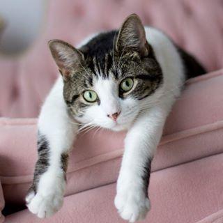 Billie Le Chat