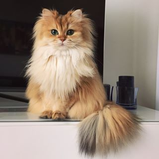 Smoothie the Cat