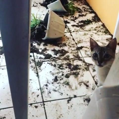 @smigoo_cat  tá laskado #cat #catlovers #catsofinstagram #cats #catlover #catlife #catstagram #cats_of_instagram