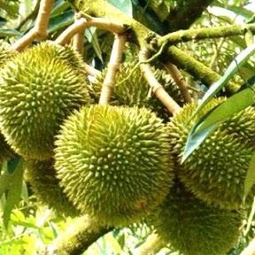 Trái Cây Sach