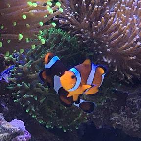 Riffaquarium Meer als Hobby