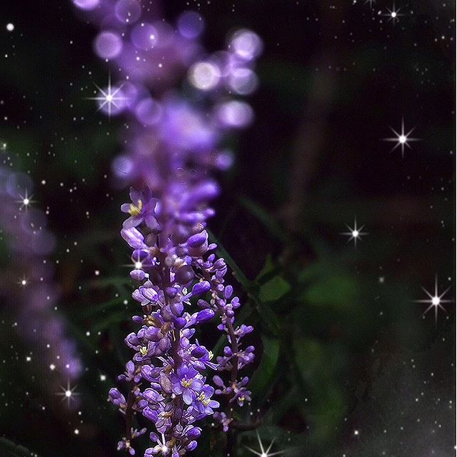 😊💜 Hello, 😊👋👋this flower is Ririope🌸💜 ✨🙋🏻♀️ Tokyo is still very hot today✨✨ 😊 Happy sunday☕️💝 ✨✨✨✨✨✨✨✨✨ 😊こんにちは〜 今日も暑いですね😵💦 ✨💜今日の花は リリオペです。 ✨ギリシャ神話の泉の妖精リリオペの名にちなんで名付けられたそうです💜✨花言葉😹忍耐💜 和名ヤブラン✨✨ #リリオペ#ヤブラン #ヤブランの花  #紫#紫の花#liliope  #Purple #Purple flowers#白金自然教育園  #リリオペ