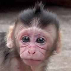 Macaque Planet
