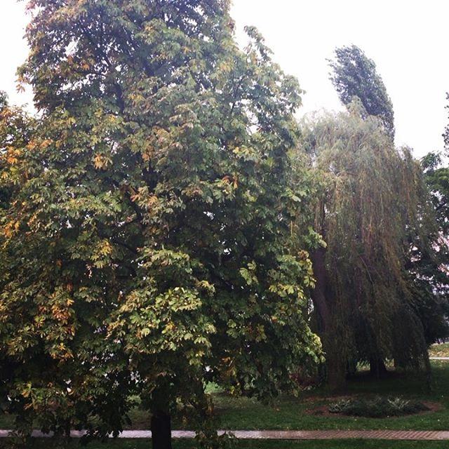 Jesień rozszalała się u mnie na dobre🍁💨💦🍂A jak u Was ? Deszczowe Dzień dobry 👋🏻 #goodmorning #jesień #wieje #leje  #ziąb #liście #drzewa #wiatr #szaleje #instagood #autumn #colorful #tree  #oldtown #widokzokna #pizgajakzacara #jaksieniemacosielubitosielubicosiema 🍂🍁Cieplutkiego wtorku 😘
