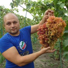 Виноградник Дашевских