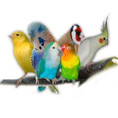 محترف الطيور Mohtarif toyour