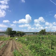 自然農法・自然栽培のピースファーム