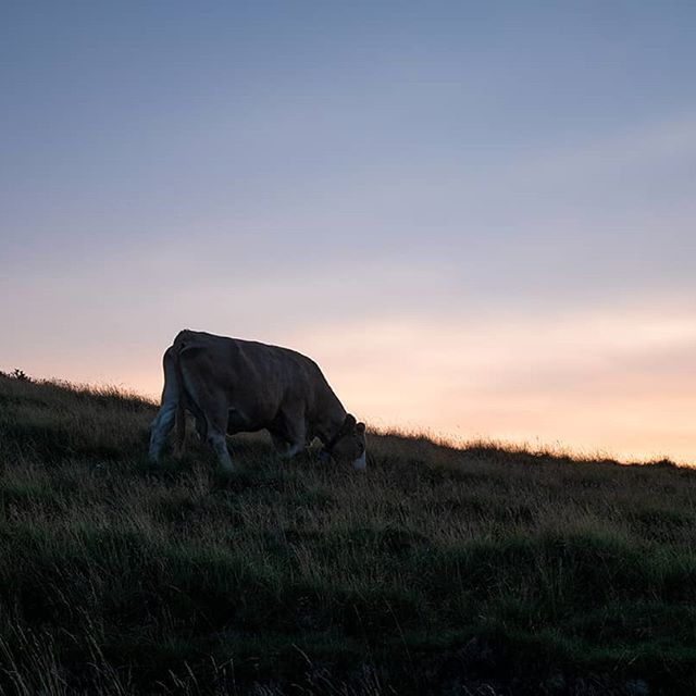 #lakecomo #mountain #sunset #cow @igerscomo @montagnelago