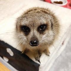 Meerkat Mong몽몽파일