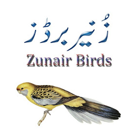 Zunair Birds