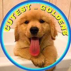 Cutest Goldens