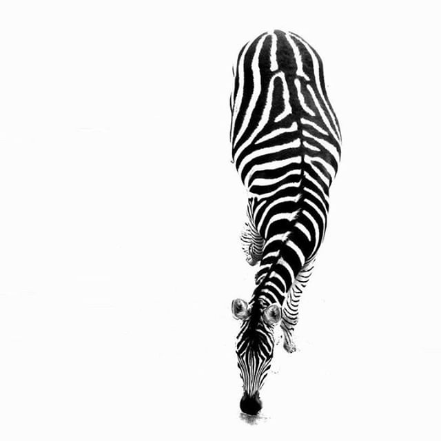 Black and White or White and Black ? 😏 . . . . . . . #newweek #blackaesthetics #blackaesthetic #black #aesthetic #blackonblack #blackout #blackstyle #betterinblack #blackispoetic #allblack #monochrome #blacklife #blacklifestyle #blacklook #wrappedinblack #allblack #blackisbeautiful #blackdesigns #luxury #blackluxury #blackedout #allinblack #blackeverything #blackaddiction #loveblack #clothes #clothing #blackclothes #blackclothing