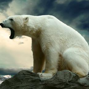 365 дней за полярным кругом