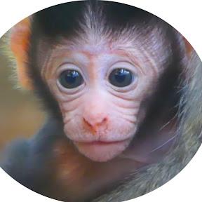 We All Love Monkeys