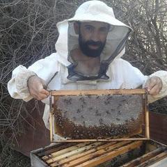 تربية النحل كما لم تعرفها من قبل