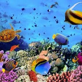 Ocean Documentary Channel