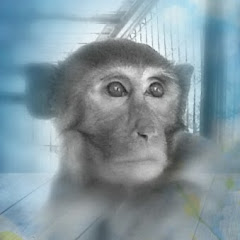 MonkeyManJoshua