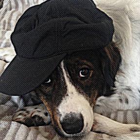 Собака Артист