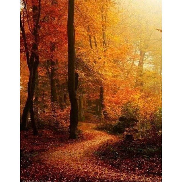 Autumn Path. 🍁🍂🎃🍁🍂🎃 . . #scenery #scene #sceneryphotography #scenes #scenic #sceniclocations #scenicview #scenicphotography #scenicphoto #scenicviews #beautiful #photooftheday #photography #photo #photos #draxlovesscenery #autumn #autumnvibes🍁 #autumn🍂 #autumcolors #autumn🍁 #autumn🍁🍂