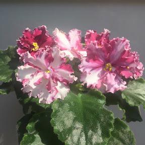 Chiwawa Flowers