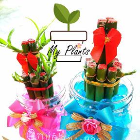 My Plants 888