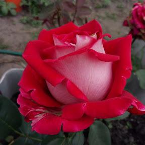 Цветочная Жизнь