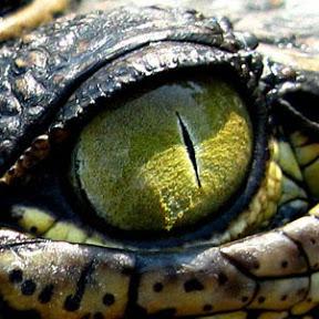 Reptilian Shapeshifter