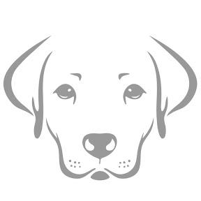 White Dog Life