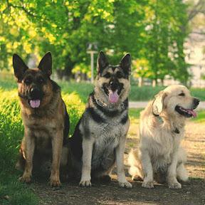 Марафон Лучшая собака
