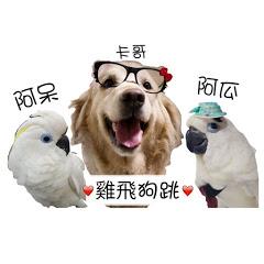 雞飛狗跳.藍眼巴丹與黃金獵犬