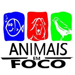 Animais em Foco