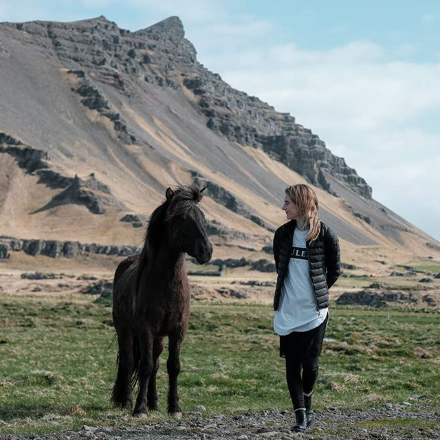 Road trip rules of Iceland #1 pet a horse🐎🚗