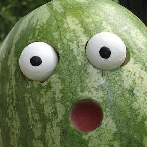 Week Old Watermelon
