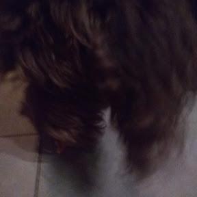 mon chien Wallace yotumito