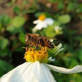 恩典蜜蜂事業