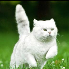 Tong Cat