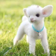 Cutest Animals Planet Video