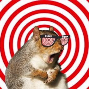 Attention Deficit Squirrel