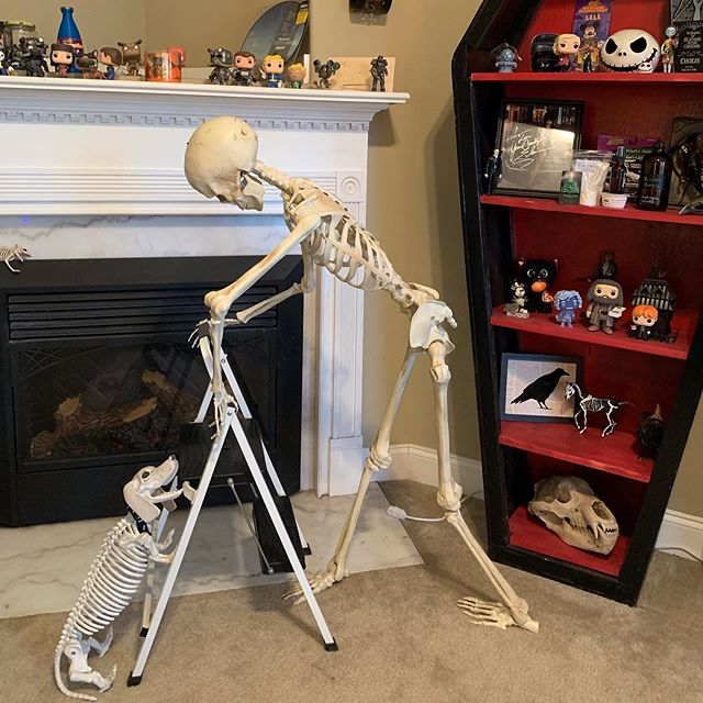Viktor and Scraps are helping take down the #fallout decor so we can put up #halloween . They are always willing to work themselves to the bone.  #viktorgraves #skeletonsofinstagram #scraps #halloweendecor #goth #gothichome #creepy #spooky