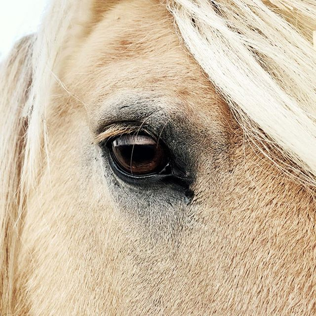 🐴Thank you to all these beautiful and wise horses 🐴